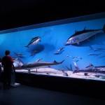 Muzeul Antipa