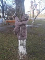 copaci imbracati