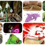 Idei pentru Weekend 5-6 Martie