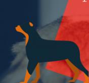 animal fest