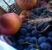 atelier-fructe