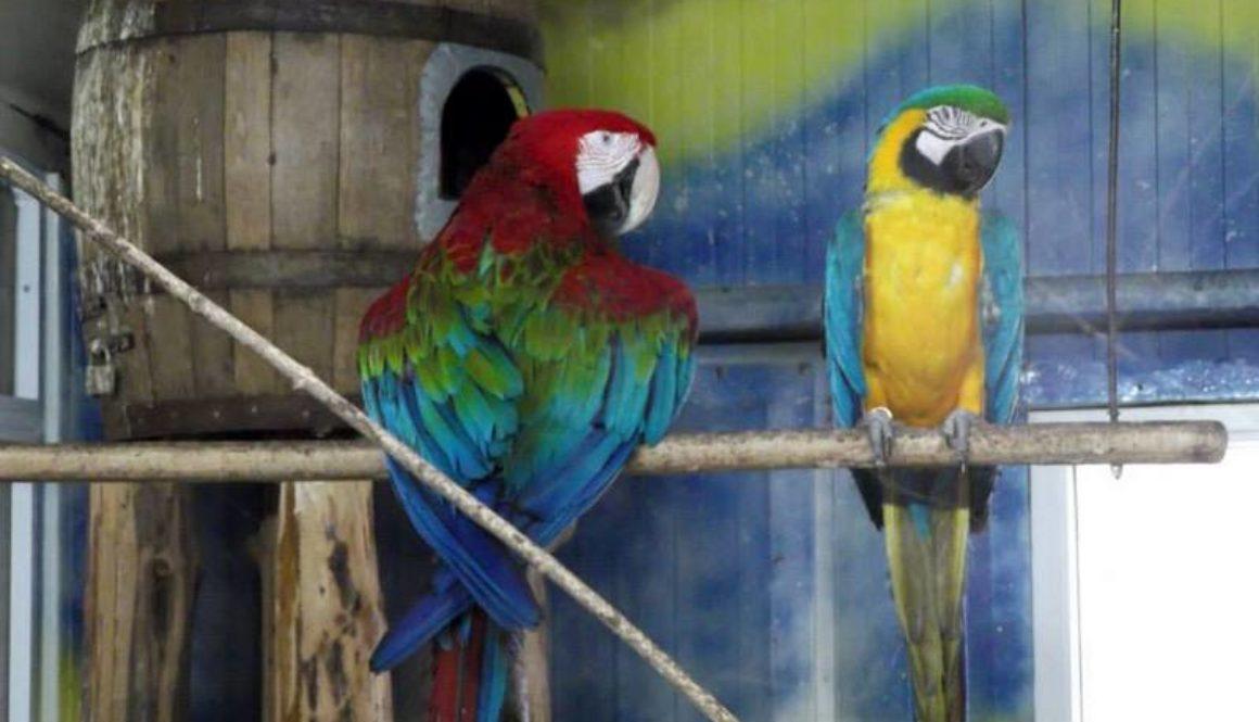 Zoo Baneasa